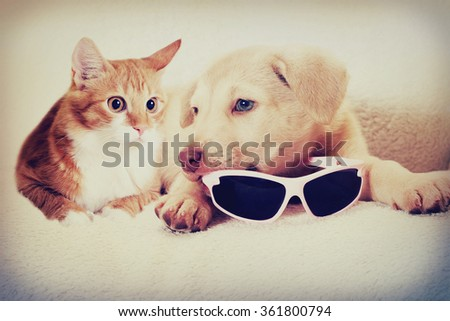 kitten and puppy instagram - stock photo