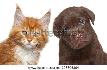 Kitten and Puppy isolated on white background - stock photo