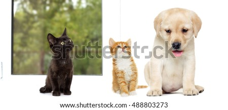 kitten and puppy Labrador on a window sill