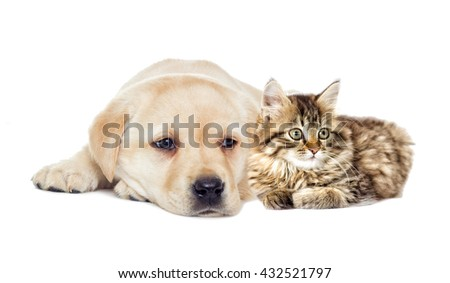 kitten and puppy lying