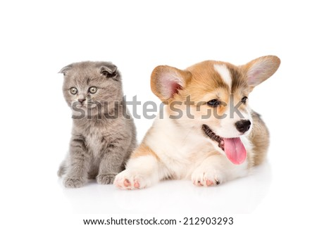 kitten and puppy lying in front. isolated on white background