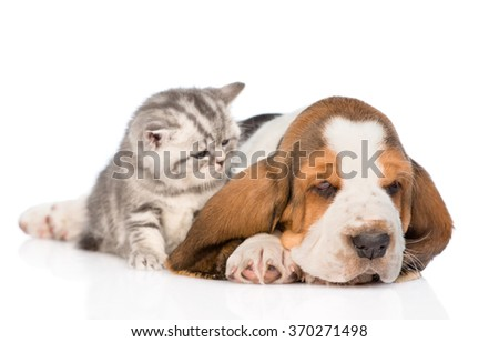 Kitten and puppy lying together. isolated on white background
