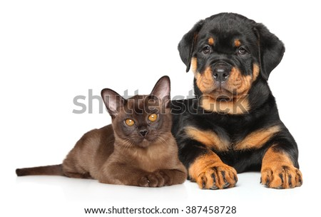 Kitten and puppy lying together on white background - stock photo