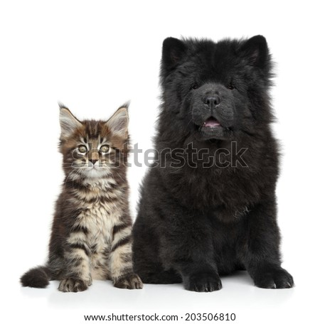 Kitten and Puppy. Portrait on white background - stock photo