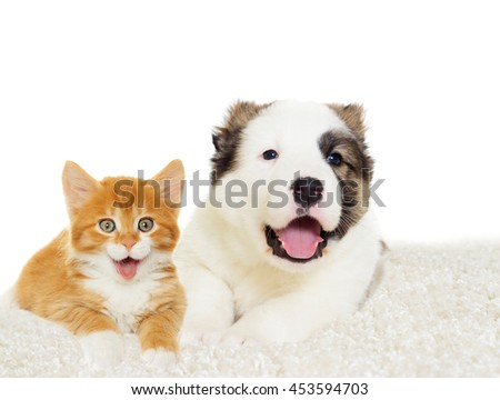 kitten and puppy together