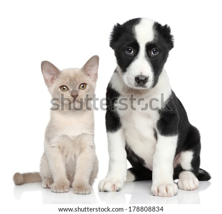 Kitten and puppy together posing on a white background