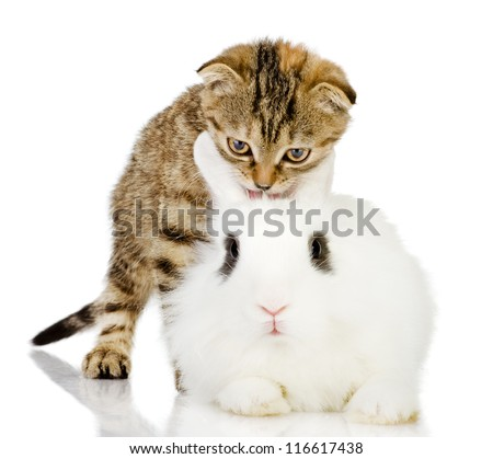 kitten and rabbit. isolated on white background - stock photo