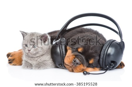 Kitten and sleeping puppy listening to music on headphones. Isolated on white background - stock photo