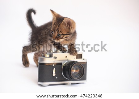 Kitten and the camera