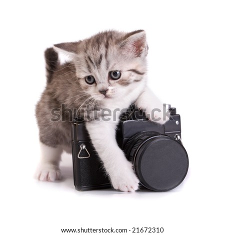 Kitten and the camera on a white background