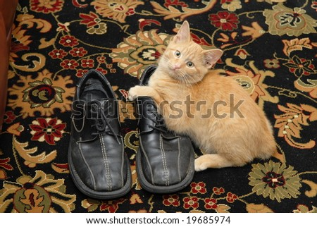 Kitten and the shoes - stock photo