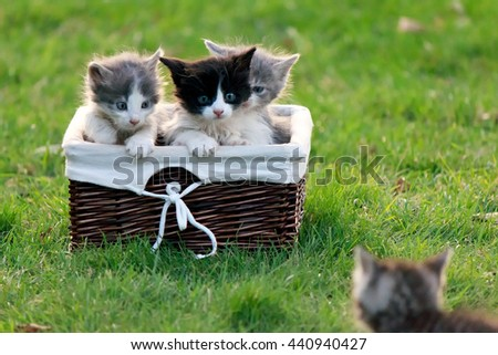 Kitten calls his friends who are sitting in a wicker basket on an adventure