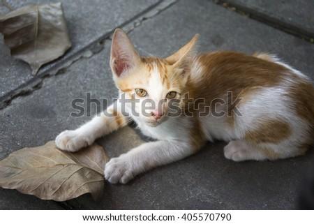 kitten cat - stock photo