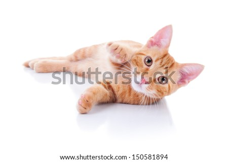 Kitten cat on white background - stock photo