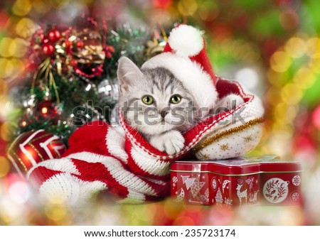 kitten christmas wearing santa hat - stock photo