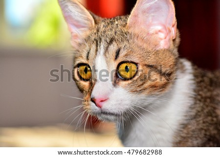 kitten close-up in the home environment