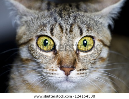 Kitten. common breed cat, with frightened eyes - stock photo