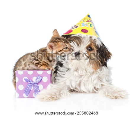 kitten congratulates puppy happy birthday. isolated on white background