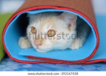 kitten cute playful selective focus of face - stock photo