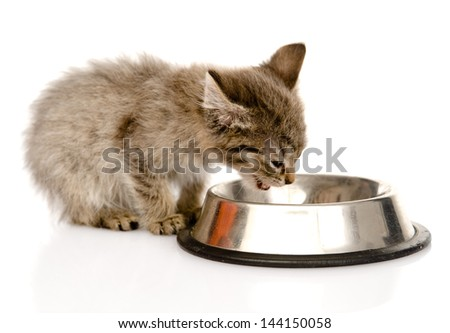kitten eating cat food. isolated on white background - stock photo