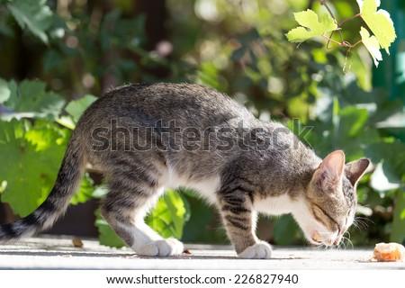kitten eats - stock photo