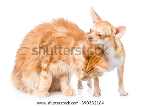 kitten gently stroked a puppy. isolated on white background - stock photo
