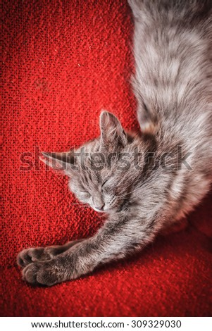 kitten grey on the red Mat sleeps sweet tightened
