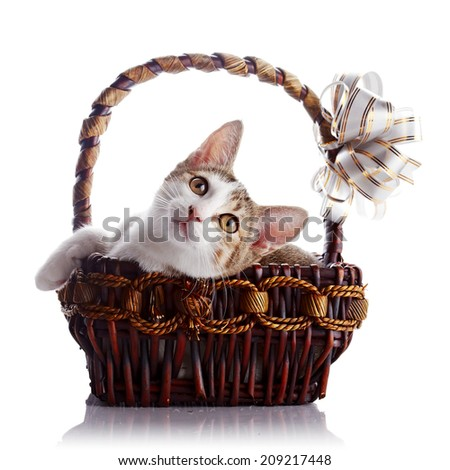 Kitten in a basket with a bow. Multi-colored small kitten. Kitten on a white background. Small predator. Small cat.