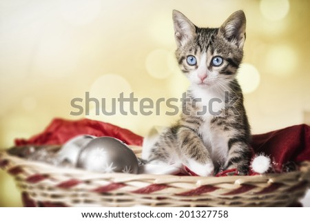 Kitten in a Christmas basket - stock photo