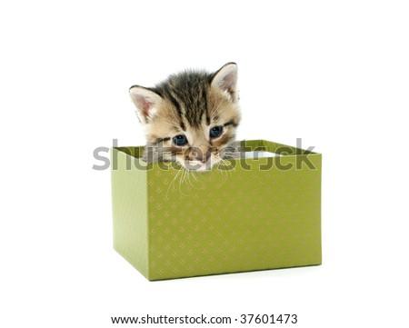 Kitten in a green box - stock photo