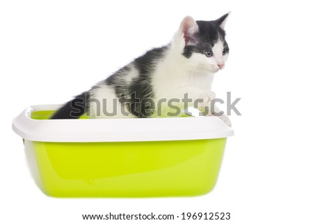 Kitten in a litter box isolated