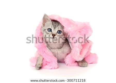 Kitten in a pink fur coat. Isolated on a white - stock photo