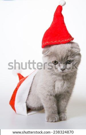 kitten in a red cap crawled out of Santa Claus hat - stock photo