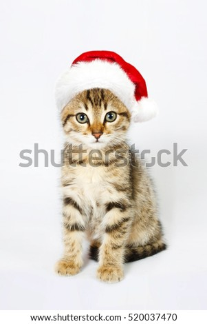 Kitten in a red santa hat. Isolated on white background
