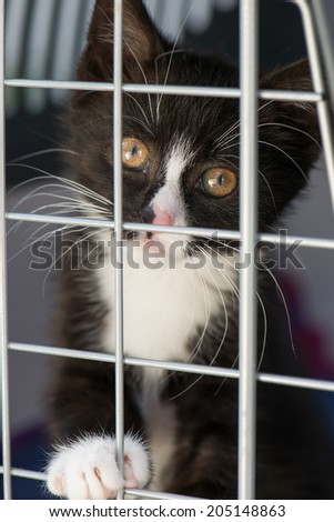 Kitten in a transport box