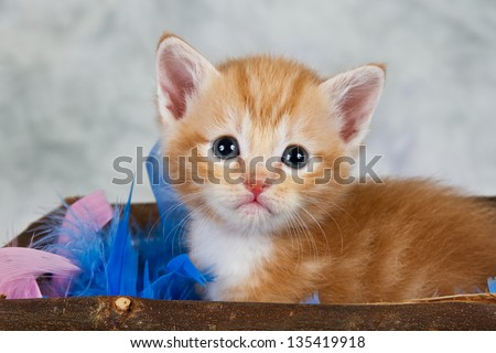 Kitten in basket brown wood small cute afraid feathers - stock photo