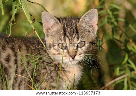 kitten in forest