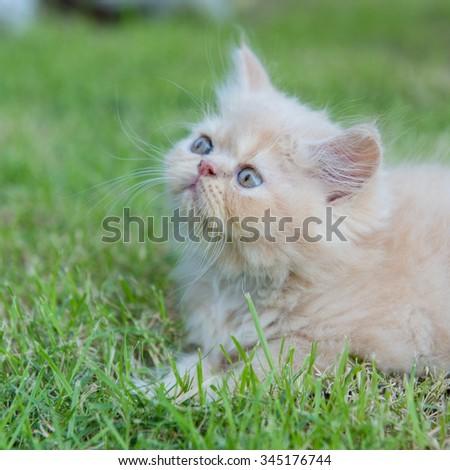 Kitten  in green field - stock photo