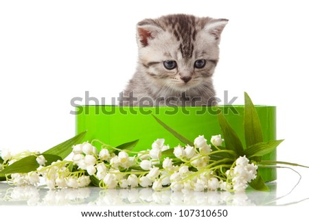 kitten in green gift box isolated on white. - stock photo