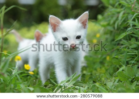 kitten in green grass
