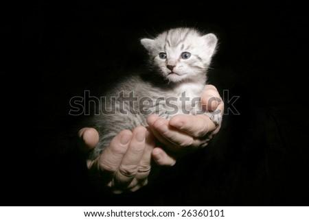 Kitten in hands - stock photo