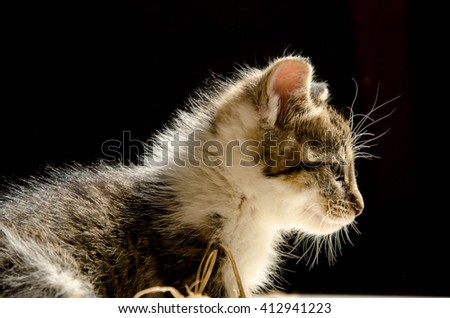 Kitten in natural light