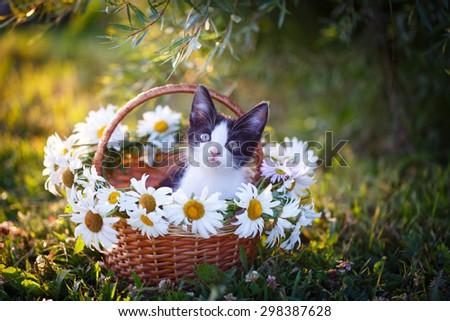 kitten in nature - stock photo