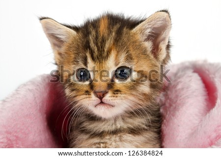 Kitten in pink blanket looking alert and ready to play - stock photo