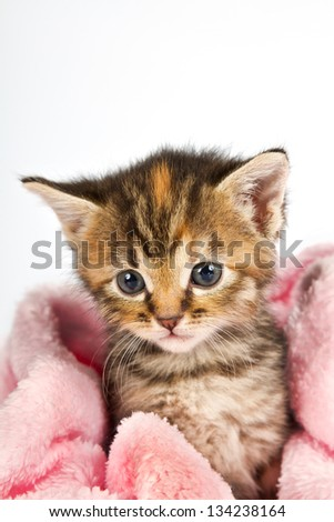 Kitten in pink towel looking sad and tired cosy warm - stock photo