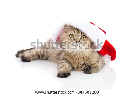 Kitten in Santa Claus xmas red hat on white background isolated - stock photo