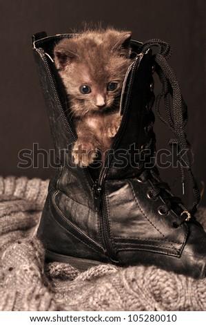 kitten in shoe looking down - stock photo