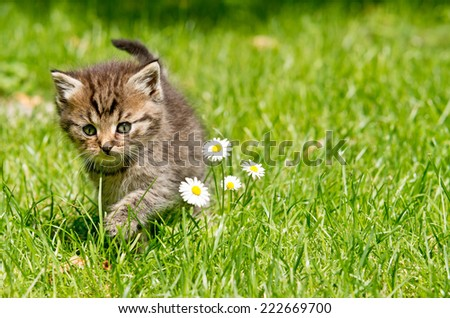 kitten in the garden - stock photo
