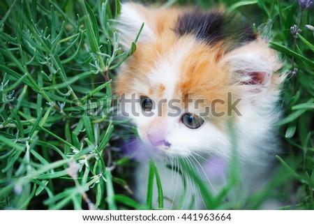 Kitten in the garden - stock photo