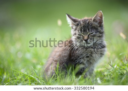 kitten in the grass, small depth of field, beautifully blurred background
